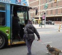 SEPTA Now Allows Four-Legged Passengers Along the Ride