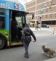 SEPTA Now Allows Four-Legged Passengers Along the Ride