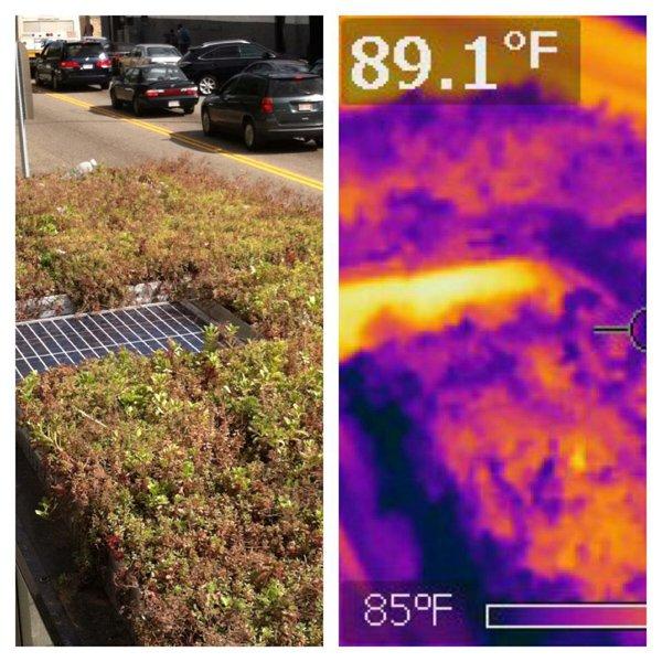 green roof, bus stop shelter, bike shelter, manufacturer usa